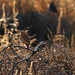 Tumbleweed Perch