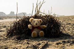 Bear on the Beach (Greyscale82) Tags: beach strand belgium teddy urlaub teddybear oostende steiff belgien 2015