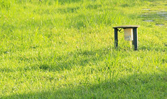 Afternoon Time (Chenghua Yang) Tags: life park green grass afternoon walk leisure grassland    takeawalk    afternoontime