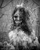 otis wall 1 small (Photo Gal 2009) Tags: portrait dogs monochrome forest woodland bristol happy woods otis spaniel cocker happydogs dogportrait blueroan englishcockerspaniel springengland blueroancocker blackwhitespaniel showtypecocker spring2015 blackwhitecocker