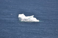 Our first sighting of icebergs- I couldn't get enough (shankar s.) Tags: seascape canada nfl iceberg floatingice coastalroad coastaltown localhistory baydeverde oceanroad icemountain coastaldrive coastalscenery easterncanada newfoundlandandlabrador icechunks baccalieutrail explorertrail breakingiceberg