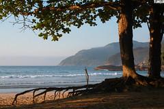Martin de S Beach  - Paraty - Rio de Janeiro - Brasil (TLMELO) Tags: ocean sunset sea brazil dog fish co praia beach brasil riodejaneiro paraty boat mar barco parati cachorro casal pedra oceano