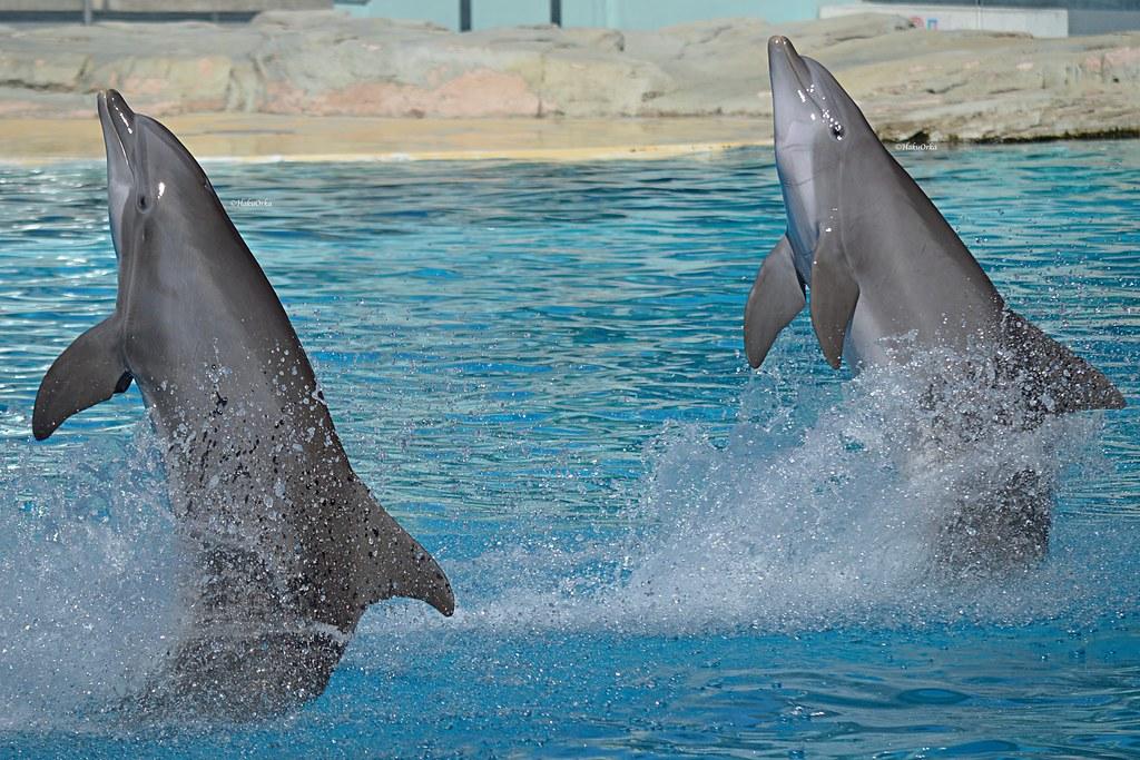 Risultati immagini per delfini show