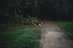 179A2478-1 (den_ise11) Tags: trees shadow dog dark outdoors riverside hiking hike idaho boise trail
