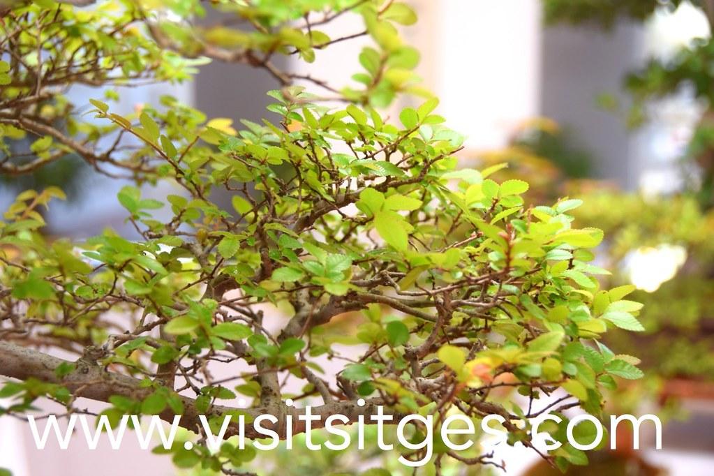 Arboles pequeos cultivo del bonsai manzano un pequeo rbol frutal with arboles pequeos cool - Cultivo del bonsai ...
