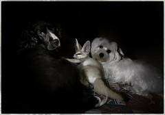 Caye,Yoda y Daisy (montoablasa1) Tags: pets color mascotas