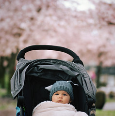 the serious guy (manyfires) Tags: family pink boy love film oregon analog mediumformat square portland downtown child blossom bokeh stroller son hasselblad henry bloom pacificnorthwest sakura pdx pnw cherrytrees hasselblad500cm