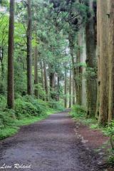 Wondering around Hakone (leon_roland) Tags: japan hakone cedars kanagawaken ashigarashimogun