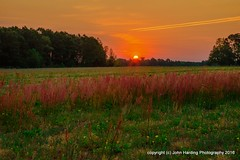 Wild Peppergrass (T i s d a l e) Tags: field sunrise dawn spring april easternnc tisdale 2016 wildpeppergrass