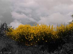 CRW_7531-1 (03TTAM) Tags: fiori toscana viafrancigena