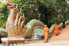 (d.huepe) Tags: world travel people travelling walking thailand temple asia peace dragon gente religion pray culture paz calm viajando monks caminar chiangmai calma mundo cultura templo budhist viajar budismo budhism monjes rezar orar armonia armony budistas