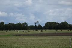 Paysage normand prs de Manvieux (Basse-Normandie) (2015-09-04 -16) (Cary Greisch) Tags: france calvados fra bassenormandie carygreisch manvieux