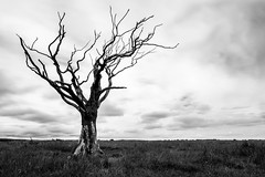 Reaching up (Angus Goosey Cogan) Tags: landscape light nature scenic sky wideangle wildlife winter yorkshire dead tree trees