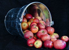 she'll be Apples (Bev-lyn) Tags: red fruit bucket container apples abundance