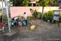 D72_9434 (Tom Ballard Photography) Tags: 20160314 indiaadventure part4 flowers cows pigs poop peeing people trash taxi food
