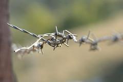 Estranha flor (Fernando R de A V) Tags: arame farpado barbed wire abstrato abstract