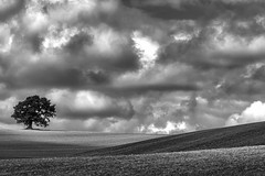 Lone Tree Mono (jactoll) Tags: warwickshire mono monochrome black white bw lonetree tree light landscape shadow sony a7ii zeiss jactoll
