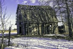 old barn.jpg (Maryann Clark) Tags: life old canada abandoned barn standing skeleton wooden rustic structure story settlers homestead ancestors leaning blown reclaimed fallingdown grandeprairie