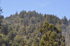 DSC_0393 (oblomberg) Tags: bigsur hwy1 pfeifferstatepark montereyca
