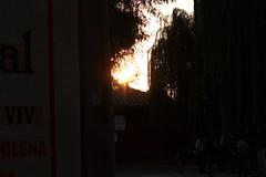 (parazoa) Tags: sunset salix babylonica almendral