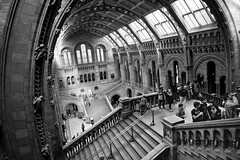 Up high (Playing_with_light) Tags: uk england bw london history museum architecture hall nikon natural entrance londres naturalhistorymuseum entry d800