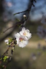 no es igual 2 que 1 (Dar09) Tags: madrid flowers spring floresdeprimavera juegolvm dairaabolinsphotography