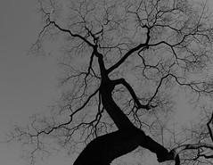 Fa / tree (bencze82) Tags: color tree voigtlander budapest sl ii f mm 20 35 voigtländer fa skopar f35 colorskopar út pozsonyi slii