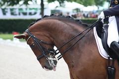 IMG_1674 (dreiwn) Tags: horse pony aachen pferd equestrian horseback horseriding chio dressage hnger reitturnier dressur 2013 pferdekopf dressuur pferdesport pferdehnger turnierreiten chioaachen