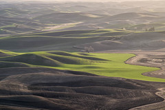 Early Spring From Steptoe Butte (NikonDigifan) Tags: washington farming agriculture palouse easternwashington palousehills steptoebutte niksoftware viveza tamron7020028 mikegassphotography nikond750