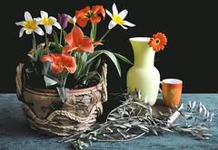 Tulipani e ulivo benedetto (Melisenda2010) Tags: stilllife naturamorta coth