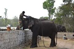 DSC_0165_2 (drs.sarajevo) Tags: india karnataka madikeri kaveririver dubareelephantpark