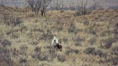 Love Will Keep Us Alive (It Feels Like Rain) Tags: horses horse texas westtexas equine foal foals aqha texasranches americanquarterhorseassociation lovewillkeepusalive maresandfoals