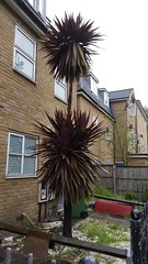 Stepney Green E1 Springtime (Carol B London) Tags: trees nature greenery e1 springtime stepney londone1 stepneygreen spring2016