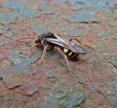 Side (Bricheno) Tags: macro insect scotland glasgow escocia westend szkocja schottland scozia cosse  esccia   bricheno scoia