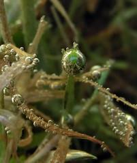 Luftblase02 (momax12) Tags: wasser makro spiegelung tropfen luftblasen waldfriedhof