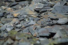 Auf der Schieferhalde (tastentipper72) Tags: slate flechte stein moos schiefer halde liebesbruch