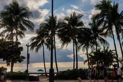 Waikiki Beach in the afternoon (Victor Wong (sfe-co2)) Tags: city sky people usa plant tree green beach public landscape hawaii warm waikiki oahu outdoor dramatic tourists palm tropical destination environment honolulu avenue relaxed visitor pleasant kalakaua
