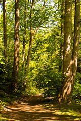 Forest Path (romanboed) Tags: park leica holland green nature netherlands dutch leaves forest landscape spring woods path meadow m foliage shade 50 summilux wassenaar kasteel 240 dense wittenburg