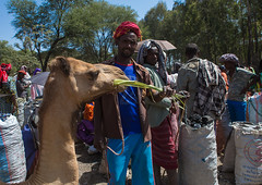 Man feeding his camel in the camel market, Oromo, Sambate, Ethiopia (Eric Lafforgue) Tags: life africa color men animal shop horizontal shopping mammal outdoors commerce basket place market sale african traditional culture tribal dromedary business domestic camel charcoal marketplace bags dailylife tradition ethiopia sell trade groupofpeople selling item indigenous domesticated hornofafrica sacks afar eastafrica abyssinia dromedaries dromedarius ruralscene oromo indigenousculture sembate sambate ethio161100