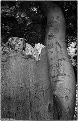 Scarred (peterphotographic) Tags: uk england bw tree london love britain olympus carve graffitti trunk nik eastlondon scarred springfieldpark microfourthirds silverefexpro2 peterhall em5mk2 p5170939sefexedwm