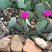 One Cautious Dog, 2 Beautiful Cactus Flowers