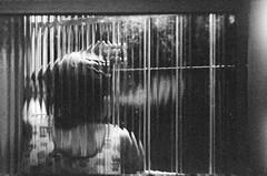 Insônia, madrugada e cigarro (A Henrique Somente) Tags: insônia madrugada cigarro mañana matutino cigarret smoke fumo fumaça through window janela através distortion distorcido noite model woman indoor interno silêncio pouco movimento filme film 35mm zenit 12xp 400tx kodak expired vencido contrast contraste josemildo película analógica analógico analogic 50mm super takumar pentax japan russia rússia japão nippon vintage emcasa pensativa senhora mainha mãe intimista remédio saúde retrato portrait pessoas femme m42 revelação antiga antique pastofphotography grade porta sono dormir descançar modelo sem manual grain