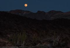 """Strawberry Moon"" over Teide Caldera (Juergen|K) Tags: mond caldera tenerife teide fujinonxf1855mm fuji1024f4 fujinonxf16mmf14 fujifilmxpro2 fujinon90mmf20"