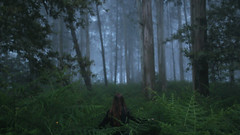 162/366: unknown (Andrea  Alonso) Tags: wood mist selfportrait me fog canon spain foggy galicia unknown 365 autorretrato niebla vigo 366