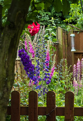 Corner of our garden (jayneboo) Tags: flowers home garden fuji odc howdoesyourgardengrow