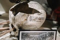 QF4C7703 (leslilundgren) Tags: skull bones pittriversmuseum