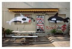 Orcas (ngbrx) Tags: city graffiti schweiz switzerland suisse stadt zrich svizzera orcas