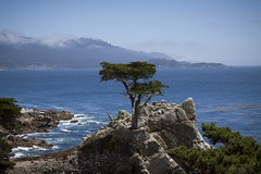 The Lone Tree (Life_After_Death - Shannon Day) Tags: wave waves blue green teal ocean sea water coast oceanic monterey montereybay bay cannery row canneryrow history california pebblebeach pebble beach outdoor landscape seascape oceanscape tourist travel pacific pacificocean canon canoneos canoneos50d 50d eos dslr canondslr eosdslr canoneos50ddslr photography lifeafterdeath lifeafterdeathstudios lifeafterdeathphotography shannonday shannondayphotography shannondaylifeafterdeath lifeafterdeathstudiosartandphotography shannondayartandphotography lone tree historical landmark