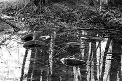 Reifensumpf (Robert.B. Photography) Tags: tree home nature animal landscape kuh cow swan natur haus tires landschaft windrad schwan baum windturbine tier reifen