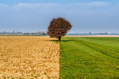 Wait for the summer (uw67) Tags: tree field spring laub feld baum frühling acker